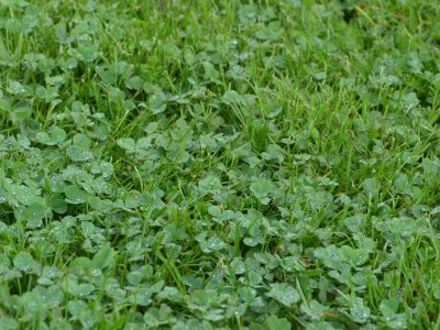 Råd til græsplænen